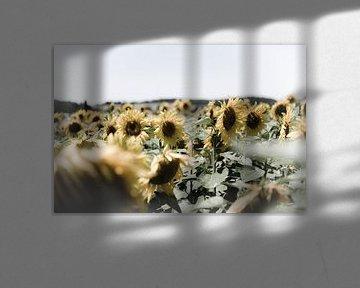 Veld met zonnebloemen von Wim Slootweg