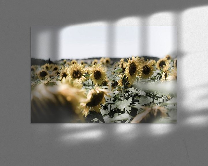 Sfeerimpressie: Veld met zonnebloemen van Wim Slootweg