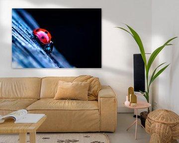 lieveheersbeestje op hout van Frank Ketelaar