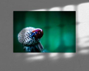 lieveheersbeestje van Frank Ketelaar