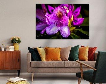 Rhododendron-Blüte von Frank Ketelaar