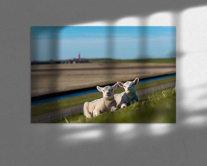 Impression: Les agneaux de Texel profitant du soleil sur Texel360Fotografie Richard Heerschap
