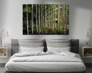 Tapete - Tropisch 18 von Veerle Van den Langenbergh