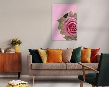 Abbildung einer rosa Rose. von Therese Brals