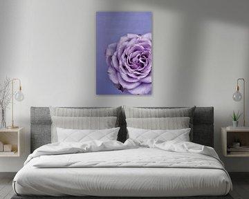 Abbildung einer violetten Rose. von Therese Brals