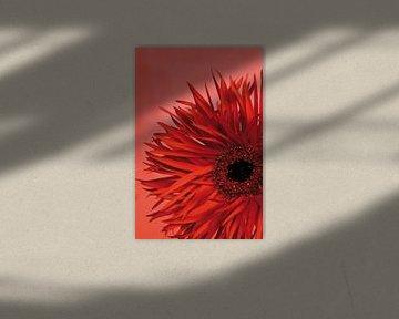 Bild einer roten Blume. von Therese Brals