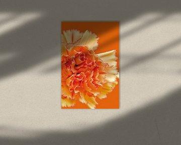 Bild einer orangefarbenen Nelke. von Therese Brals