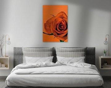 Bild einer orangenen Rose. von Therese Brals