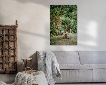 Palme von Huib Vintges