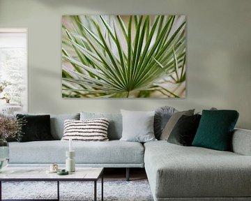 palm sur Huib Vintges