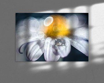 Une goutte d'eau sur une fleur