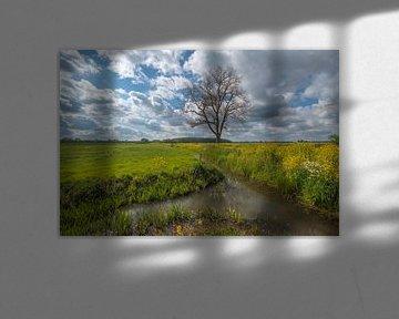 Baum am Graben von Moetwil en van Dijk - Fotografie