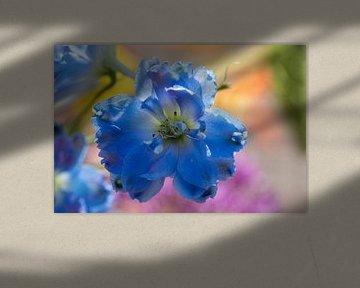 Blaue Blume: Rittersporn von Sia Windig