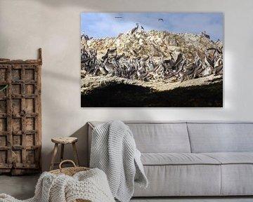 Pelikanrock von Andrew van der Beek