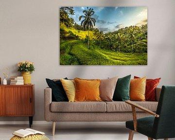 Reisfeld, Ubud Bali von Oscar Limahelu