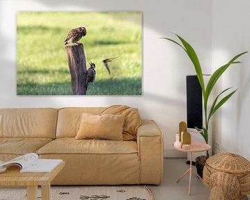 Vögel von Aspectus | Design en Realisatie