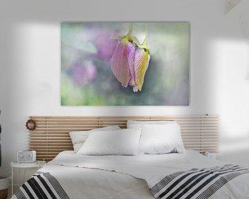 Flügelblume in der Knospe von Rietje Bulthuis