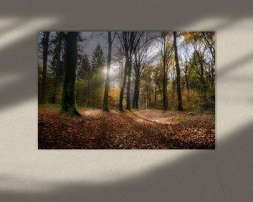 Nebulöser Herbstwald