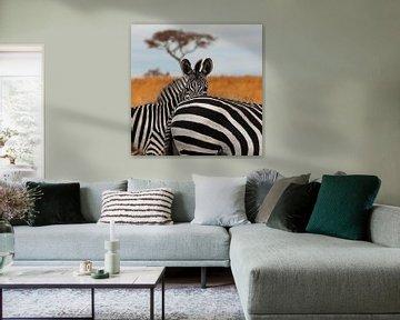 Zebra's in het Tarangire National Park, Tanzania. van Alida Stuut