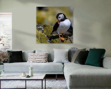 Papageientaucher / Papageientaucher von Aspectus | Design en Realisatie