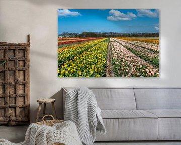 Tulipfield von Aspectus | Design en Realisatie