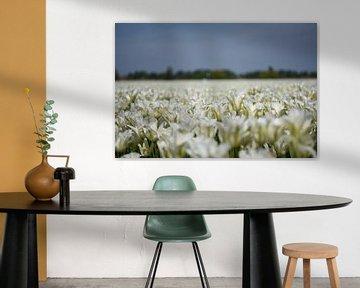 Weiße Tulpen in der Zwiebelregion von Maartje Abrahams