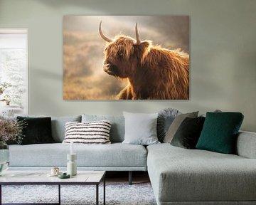 Schotse Hooglander van Karel Ton