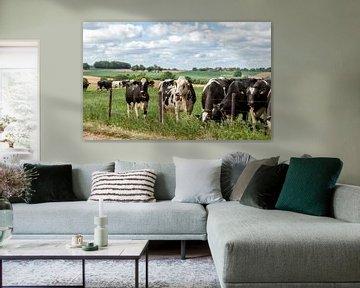 Nieuwsgierige koeien in Zuid-Limburg van John Kreukniet
