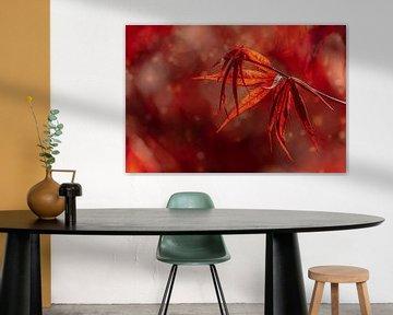 Rode esdoorn van FotoSynthese