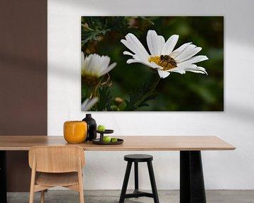 Biene auf Gänseblümchen von Tjamme Vis