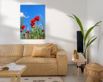 Kleurrijk van Henk Pijnappels