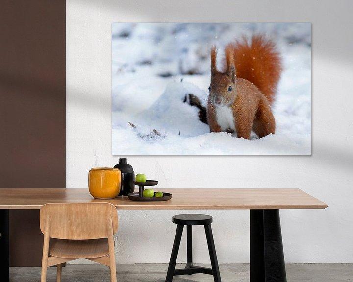 Beispiel: Eichhörnchen in Berlin von Heiko Lehmann