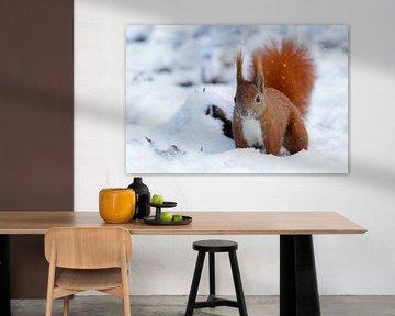 Eichhörnchen in Berlin