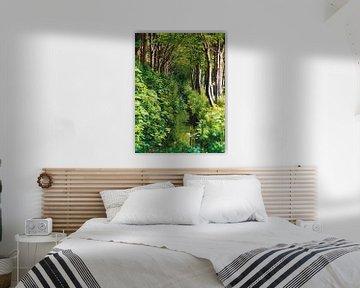 Een bospad van Wendy Tellier - Vastenhouw