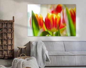 Holländische Tulpen von DVT Photography