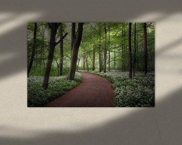Une promenade dans la forêt en fleurs