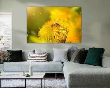 Fleißiges Bienchen von zwergl 0611