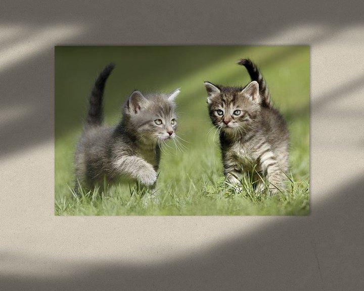 Beispiel: Katzen von Heiko Lehmann