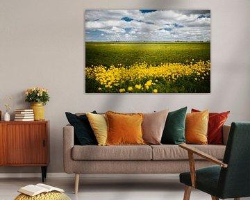 Paysage frison avec des fleurs de colza sur Martina Ketelaar