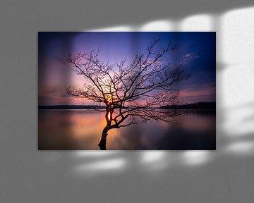 Eenzame boom bij de Möhnesee van phil.photographiert