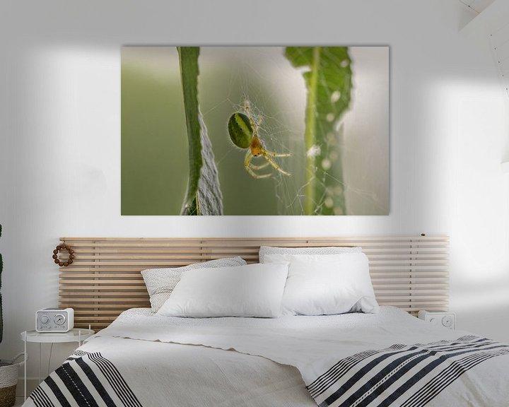 Beispiel: Spinne im Spinnennetz von lichtfuchs.fotografie