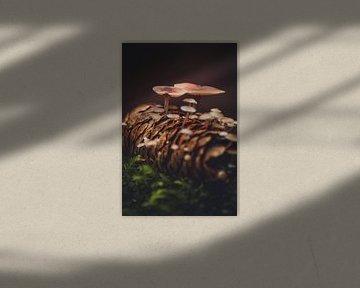 Pilze wachsen im Tannenzapfen von lichtfuchs.fotografie