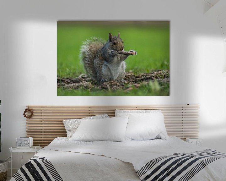 Sfeerimpressie: Eekhoorn in Montreal van Harm-Jan Tamminga