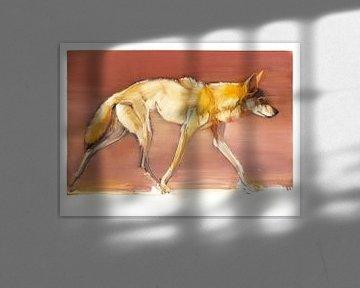 Arabischer Wolf von Mark Adlington