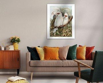 Deux Perroquets Blancs