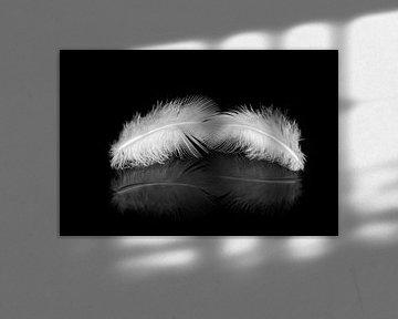 Flügel von eric brouwer