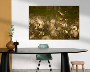 Boterbloemen in volle glorie van Jannie Looge
