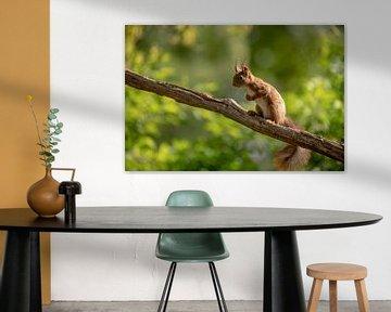 Eichhörnchen auf Zweig von Tanja van Beuningen