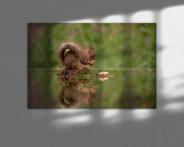 Eichhörnchen mit Nuss. von Tanja van Beuningen