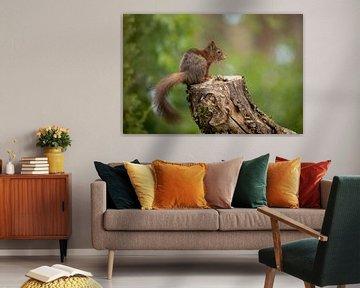 Eekhoorn op stam. van Tanja van Beuningen